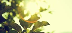 feuilles vertes soleil
