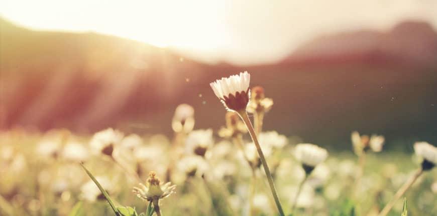 fleur dans les champs soleil